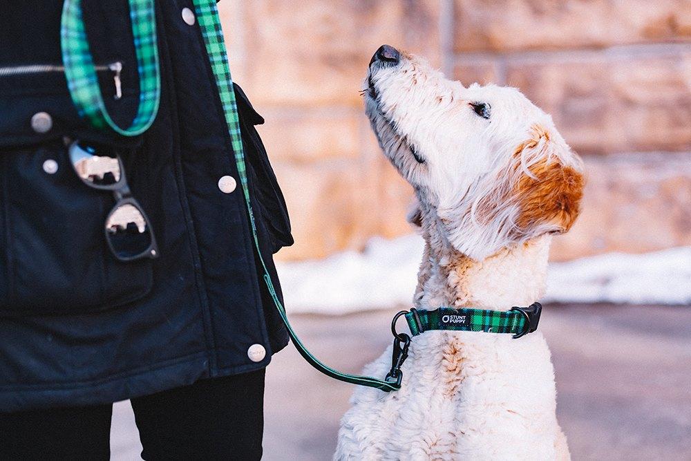 Jak by vašemu psovi slušel nový obojek Stunt Puppy?