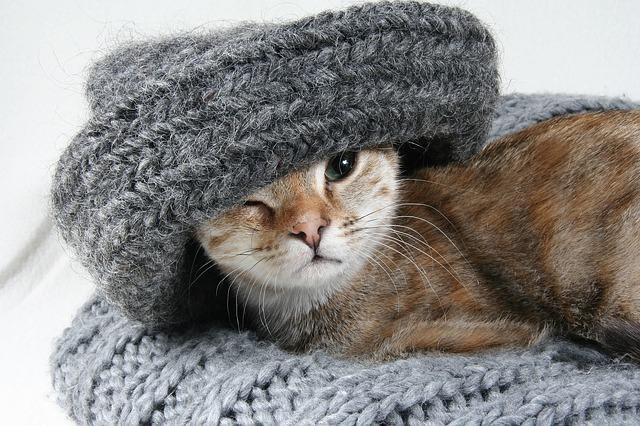 Vyprat svetr je docela věda. Téměř každému z nás se někdy oblíbený svetr  během praní zmenšil o pár velikostí 950c630b4a