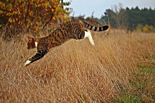 chlpaté mačička com