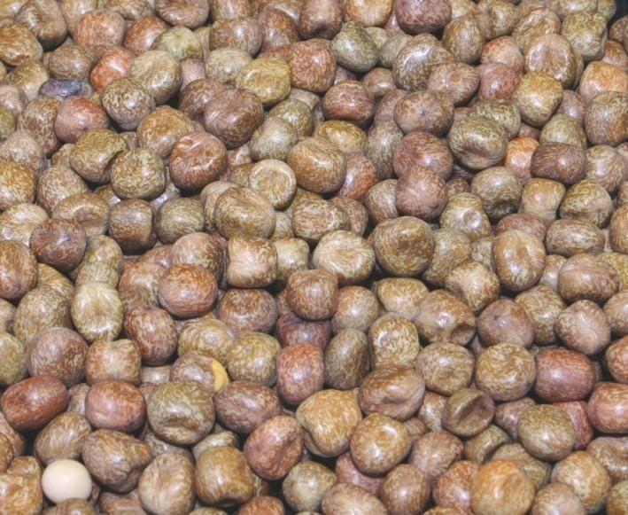 Mikbaits Javorové semínko 10kg