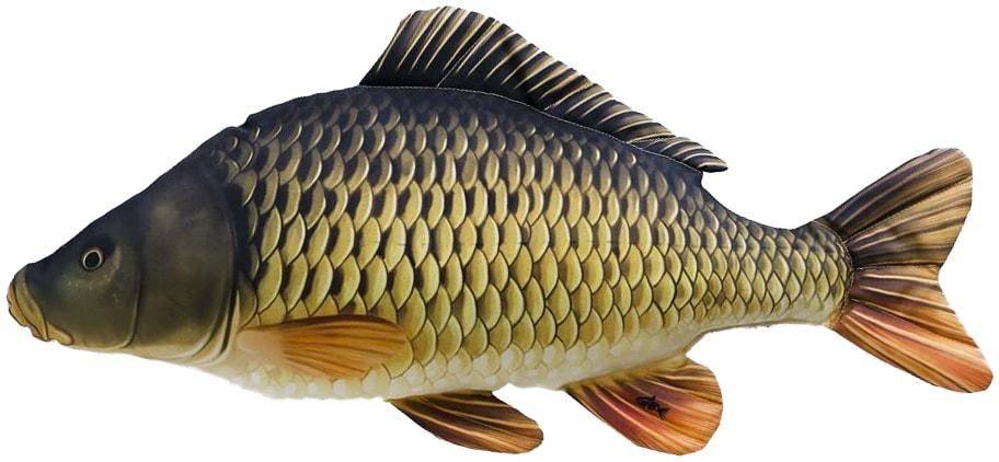 Gaby Polštář Kapr šupináč 64 cm   Ryby - polštáře   Chyť a pusť