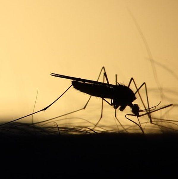 Komáří kousnutí