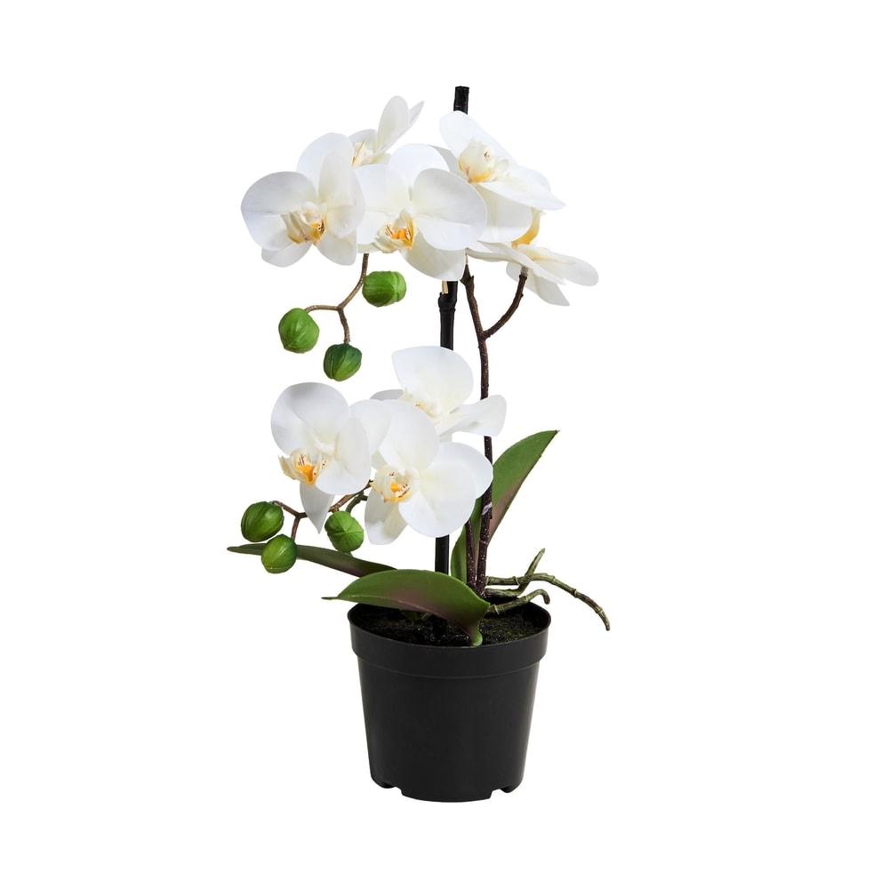 FLORISTA Orchidej v květináči 35 cm - bílá