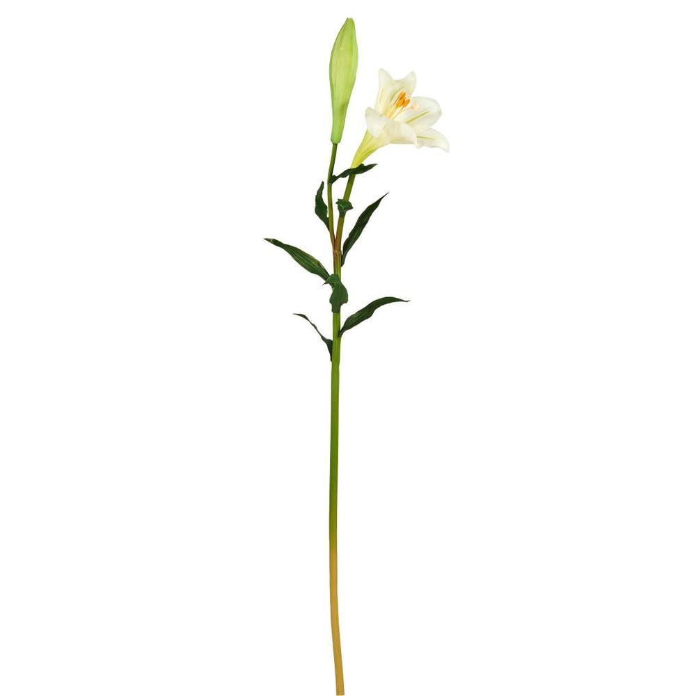 stříkající lilie