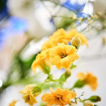 Žlutá, modrá a bílá: to jsou …