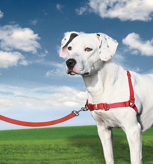 Postroj pro psy proti tahání EasyWalk - červené / L