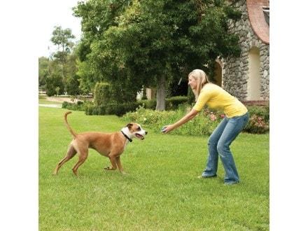 Bezdrátový ohradník pro psy Petsafe Stay + Play - pro 1 psa