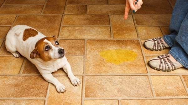 Czystość i pies