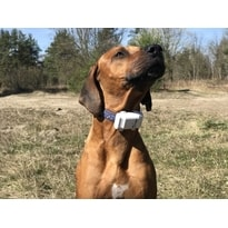 Tractive XL GPS Tracker for dogs