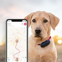 Tractive GPS Tracker for dog
