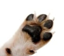 Claws and paws care
