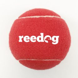 Reedog tennis ball for the dog - L
