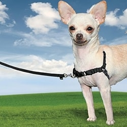 Harness for dog EasyWalk