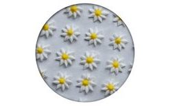 Sugar decoration - Aster 35 pc. white