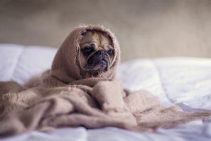 Hogyan lehet megfelelően mosni az ágyneműt