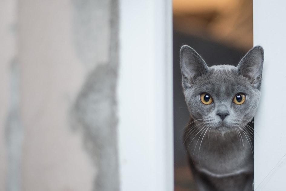 velká chutná kočička instruktážní videa análního sexu