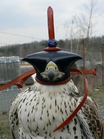 Falconry