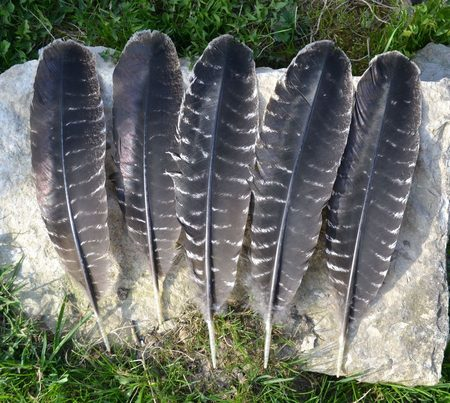 FEATHER from TURKEY arrows
