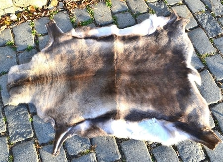 REINDEER FUR, 1ST QUALITY CLASS, IMPORT: LAPLAND