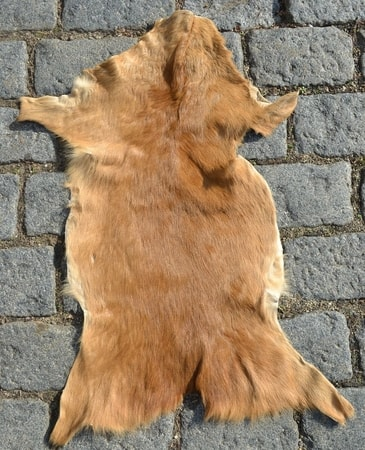 Roe deer, fur